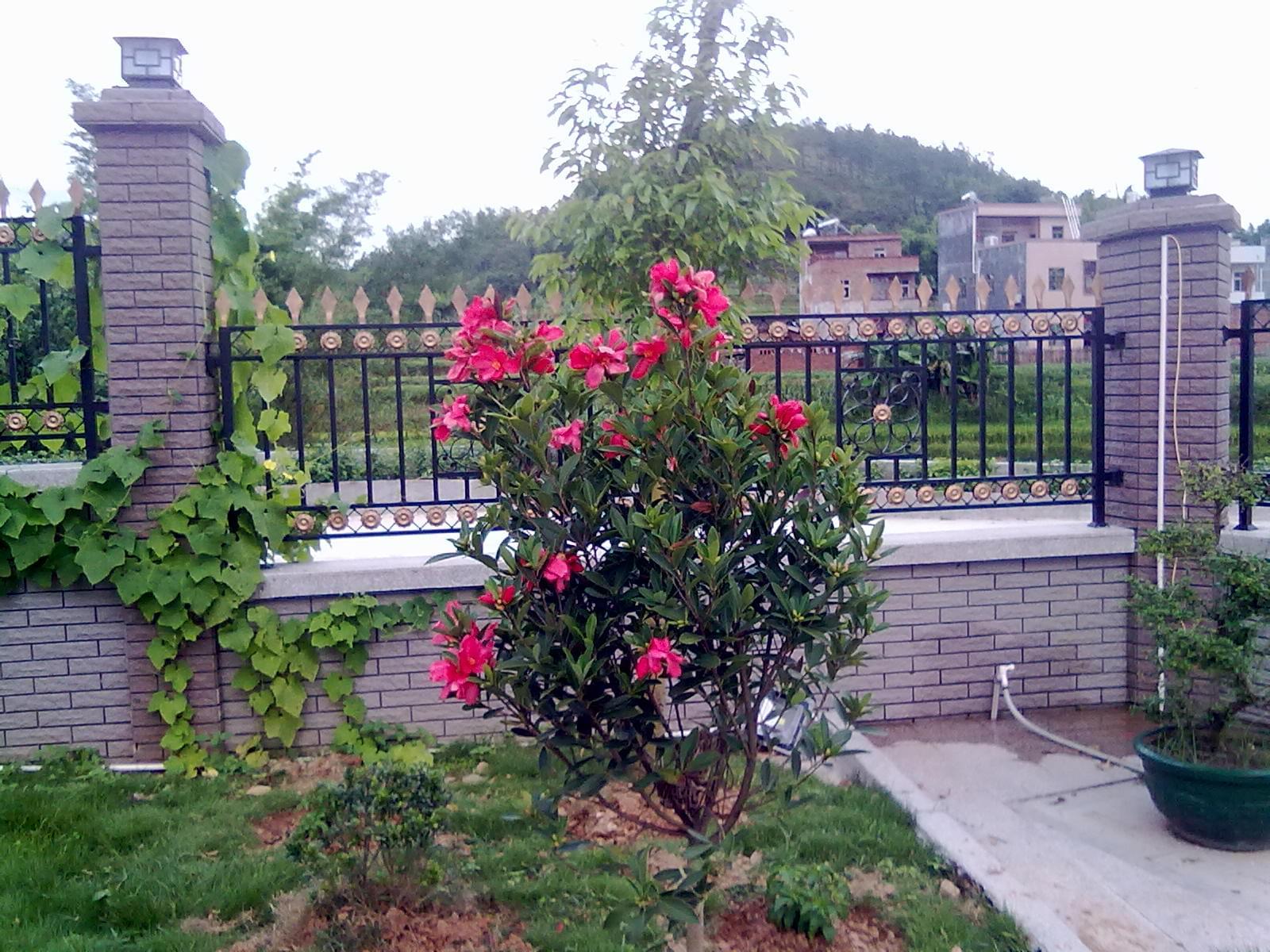 绿化-小庭院绿化设计精品/农村庭院绿化/农村小庭院绿化设计/农村庭院