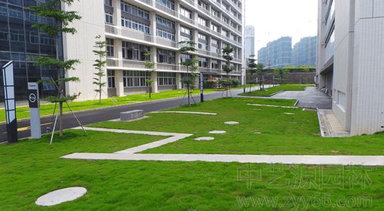 深圳园林绿化之齐心文具绿化工程项目完工