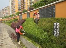 绿化养护中修剪