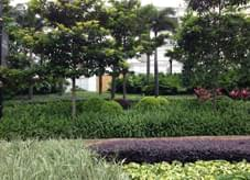 井然有序、紧凑之园林绿化完美缔造组团式绿地