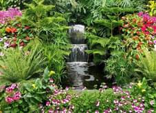植物配置大荟萃,园林绿化之典范——以小见大