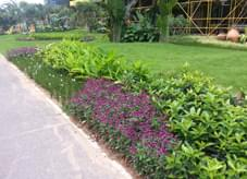 极具规则线条之园林绿化陪衬道路旁绿地