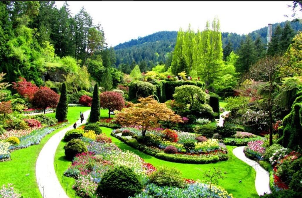 园林绿化设计之植物搭配