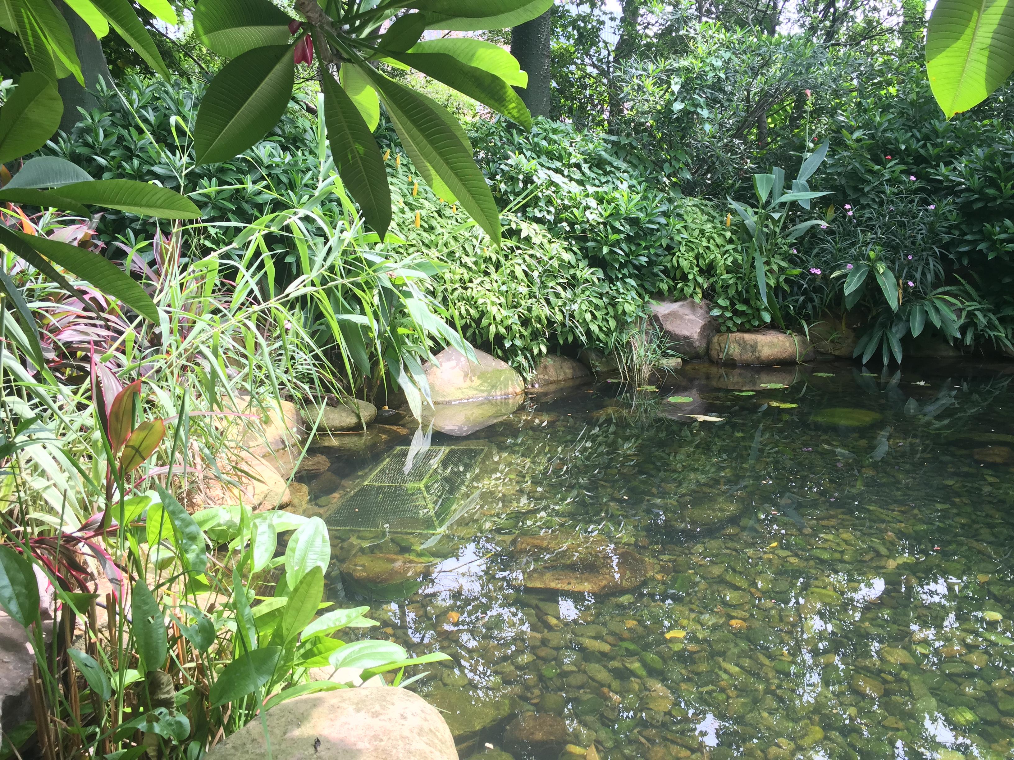 惠州紫金刘总别墅庭院园林景观